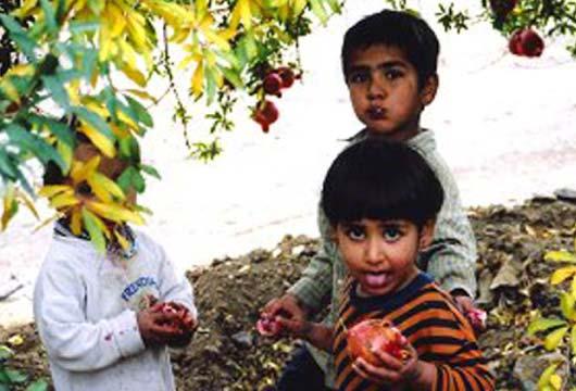イランのザクロ畑で遊ぶ子供