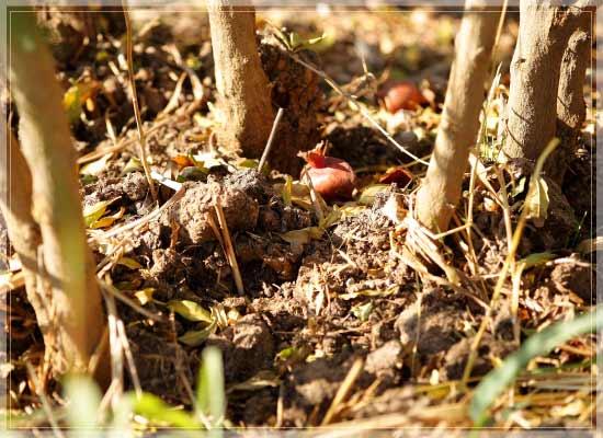 科学肥料を使わない土