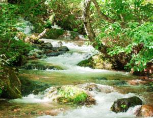 豊かな川の天然の水